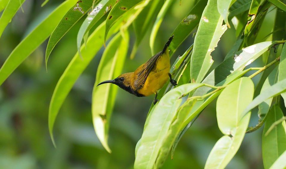 bird on bamboo grass foliage