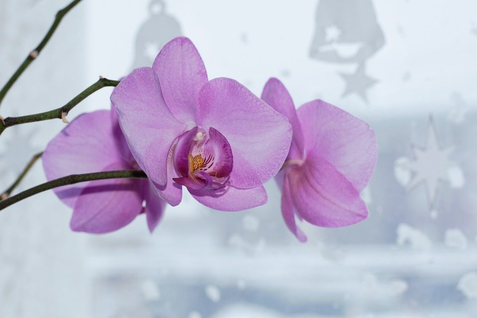 Indoor Care Tips For Orchid Plants
