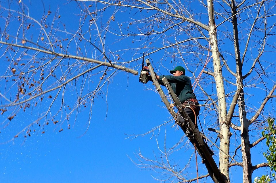 man trimming high tree branches