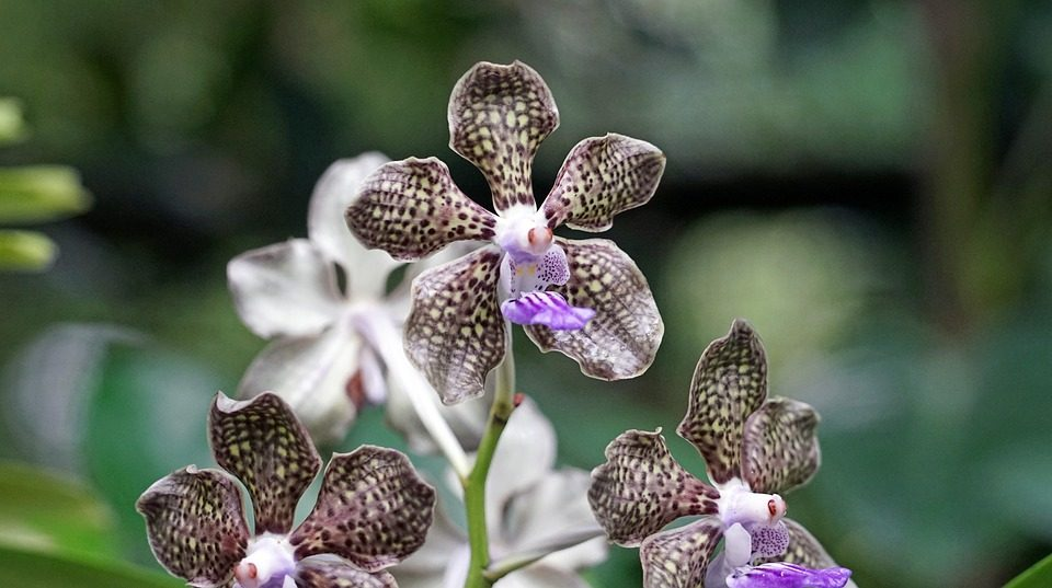 How to Protect Your Orchid Garden from Pests